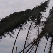 Windbruch-WJP-12