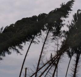 Windbruch-WJP-13