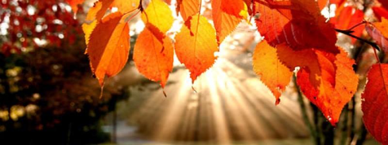 Herbst2014