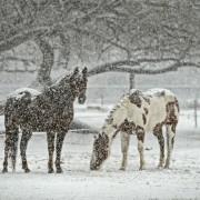 schnee_pferde
