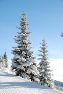winter-5701_1280