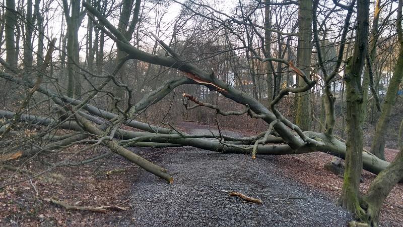 150331baum