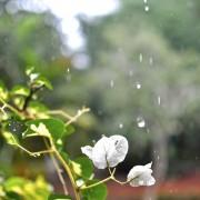 flower-180869_1920