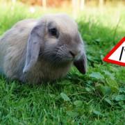 rabbit-882663_1920