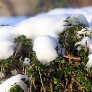 snow-613620_1920