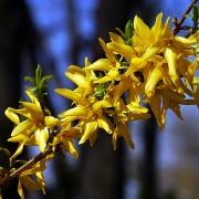 spring-105633_640