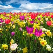 spring-awakening-1197602_1920