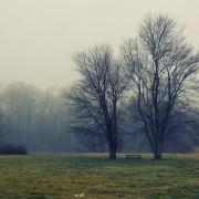 tree-1144327_1280
