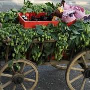 cart-436550_640