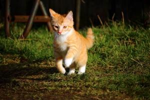 cat-1166153_1920