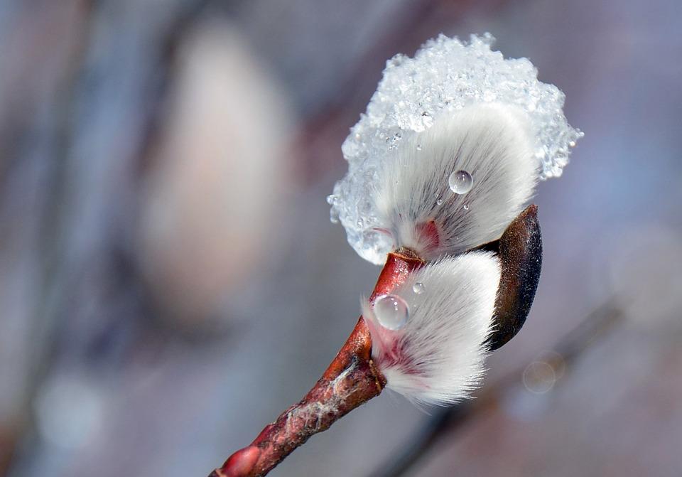 flower-664313_960_720