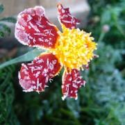 flower-981498_640
