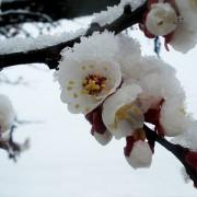 spring-323353_640