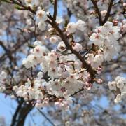 spring-flowers-709602_1920