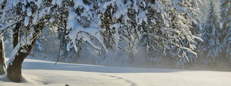 winter-530907_960_720