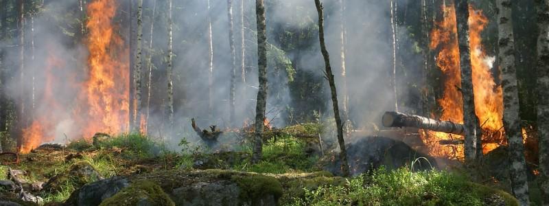 160501waldbrand