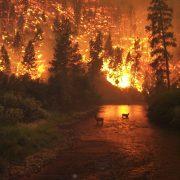 160812waldbrand