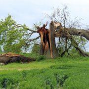 storm-damage-597217_960_720