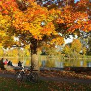 autumn-228150_640