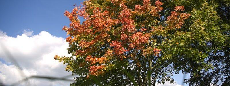 autumn-964300_640