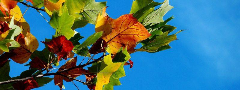 autumn anal
