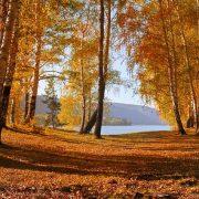 leaves-72908_640
