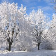 winter-1047067_960_720