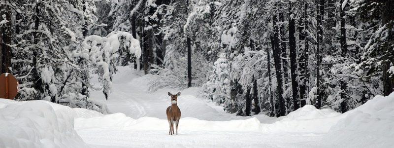 deer-1605673_960_720