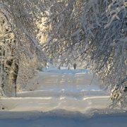 winter-1060526_960_720