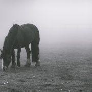 animal-1836115_960_720