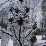 freezing-rain-743968_1920