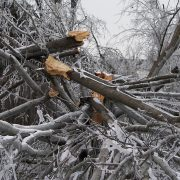 tree-destruction-282553_960_720