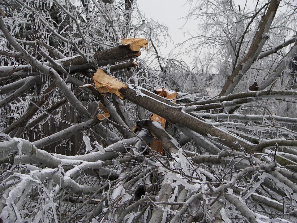 tree-destruction-282553_960_720