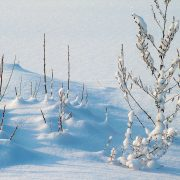 winter-234721_1920