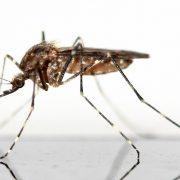mosquito-83639_960_720
