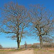 oak-1995292_1920