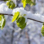 leaves-1359288_960_720