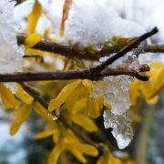 winter-blast-1352356_960_720