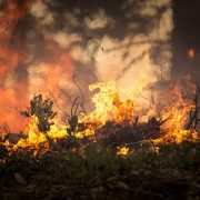 forest-fire-2268729_960_720