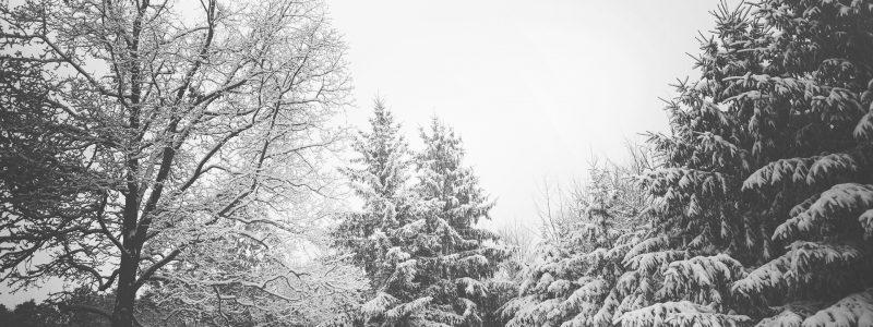 winter-2628090_1920