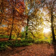 autumn-leaves-2963220_960_720