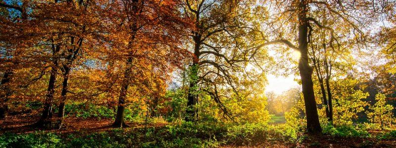 autumn-leaves-2963220_960_720