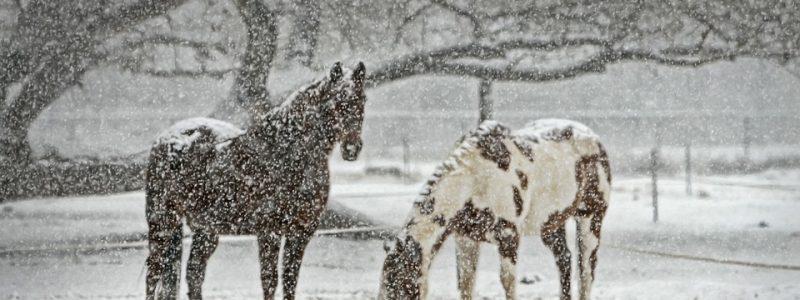 horse-419743_960_720