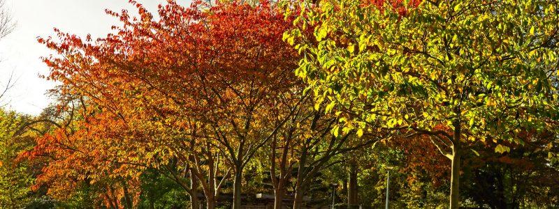 trees-2944215_1920