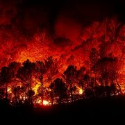 forest-fires-2930096_960_720