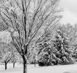 winter-3210540_960_720