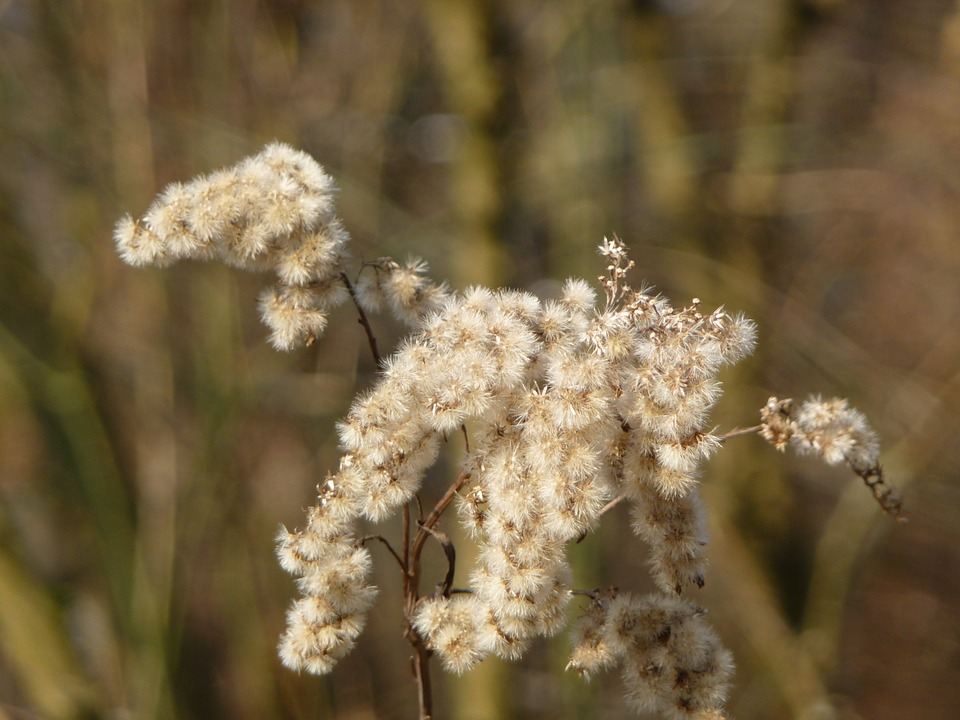 grasses-flower-5121_960_720